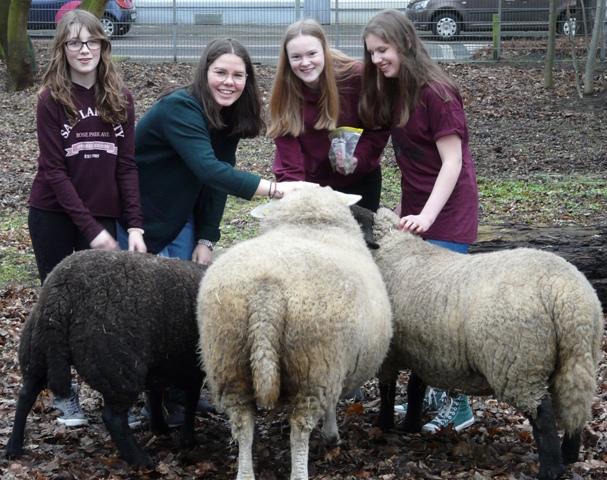 Landwirtschaft Franziskusschule Schafe web