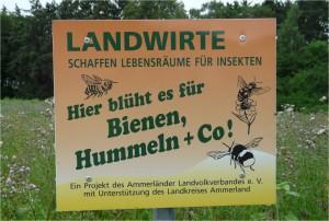 Schild Ammerland